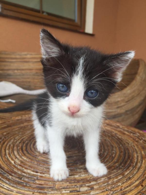 małe kotki oddam